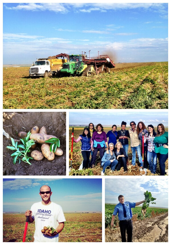 press trip, potato, potatoes, harvest, idaho, idaho falls