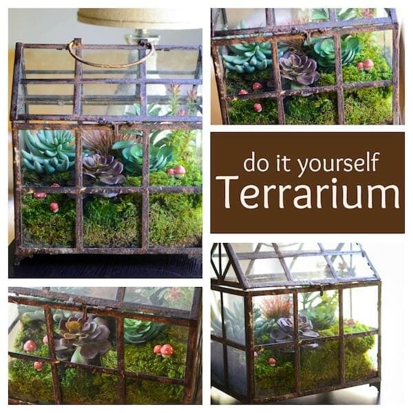 DIY Terrarium from www.thenovicechefblog.com