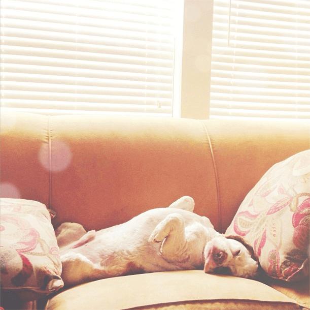 Brody sleeping.