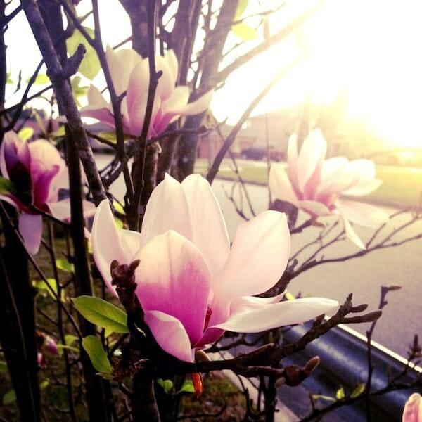 Spring in FL