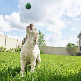 Brody playing fetch.